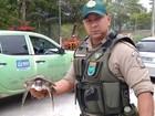 Patrulha Ambiental resgata tartaruga marinha no Recreio, Rio