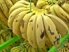 Preço da banana tem alta de mais de 11% nos últimos 12 meses no Pará