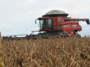 Colheita da soja avança e chega a 4,1% da área plantada em MT