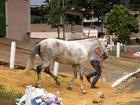 Mais dois cavalos são diagnosticados com mormo, em GO