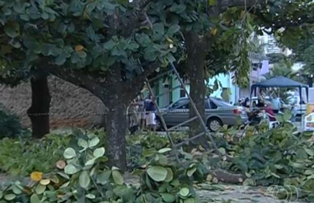 Homem leva choque enquanto podava árvore na porta da casa dele, em Goiânia, Goiás (Foto: Reprodução TV Anhanguera)