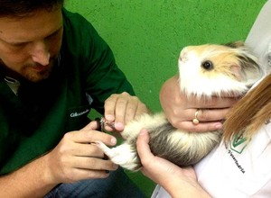 Pet shop tem atendimento veterinário, hospedagem e tratamento estético (Foto: Reprodução Facebook)