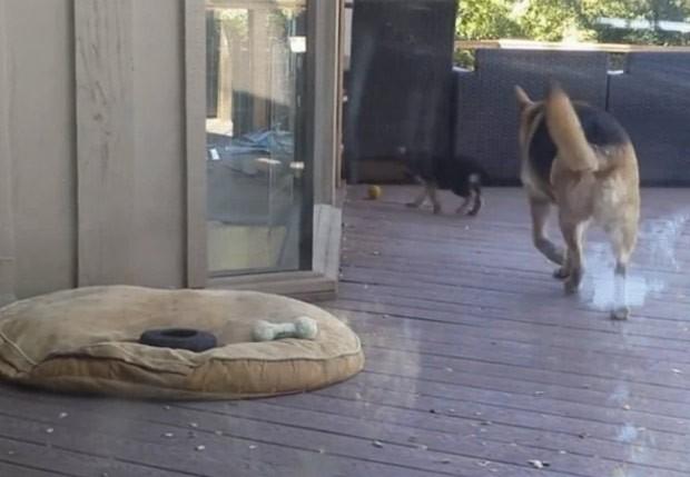 Cadela seguiu filhote e o forçou a voltar para caminha (Foto: Reprodução/Reddit/SAFE4WORKS)