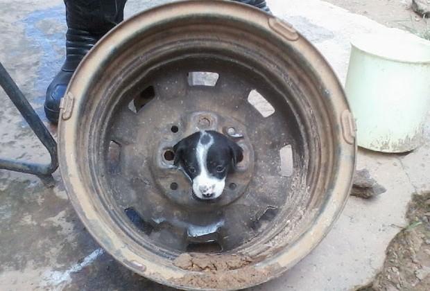 Cachorro fica preso em roda de carro, em Goiás (Foto: Divulgação/ Corpo de Bombeiros)