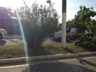 Carro atinge árvore e  capota na Avenida Beira Mar em Aracaju