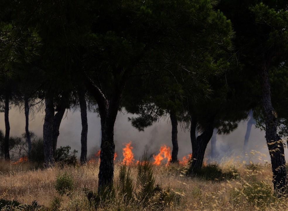 Chamas em floresta próxima ao Parque Nacional de Doñana, na Espanha (Foto: CRISTINA QUICLER / AFP )