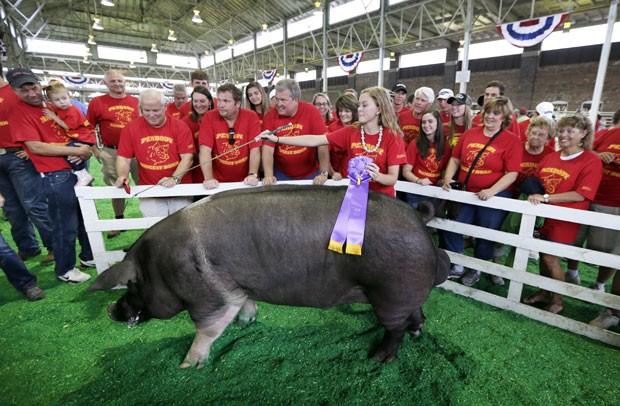 Pesando mais de meia tonelada, porco chamado Peabody venceu competição em Iowa (Foto: Charlie Neibergall/AP)