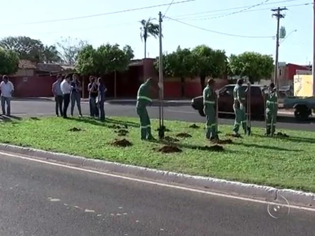 Projeto TEM Mais Verde estimula plantio de árvores em Olímpia (Foto: Reprodução / TV TEM )