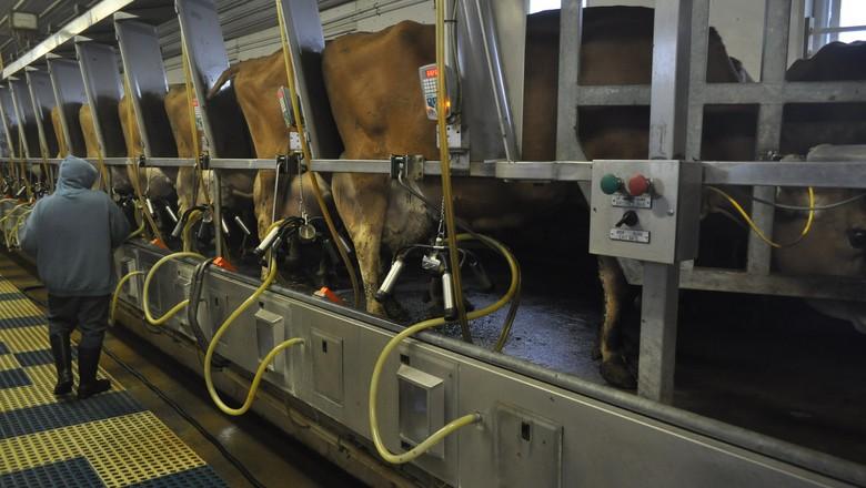 leite-ordenha-mecanizada-pecuaria-leiteira-raça-jersey (Foto: United Soybean Board/CCommons)