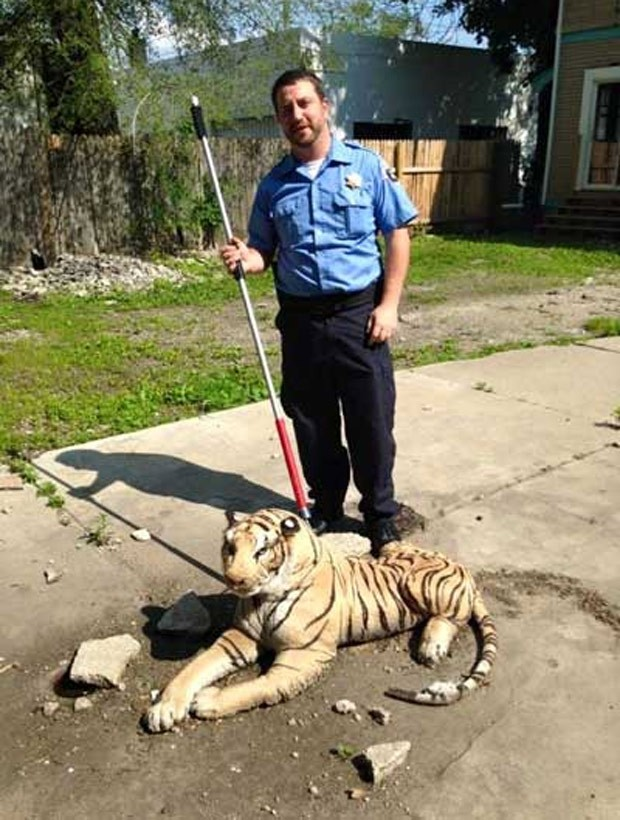 Agente Joe Dainelis se deparou com tigre de pelúcia (Foto: Reprodução/Facebook/Kent County Animal Shelter)