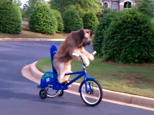 'Norman' levou dez semanas para aprender andar de bicicleta. (Foto: Reprodução)