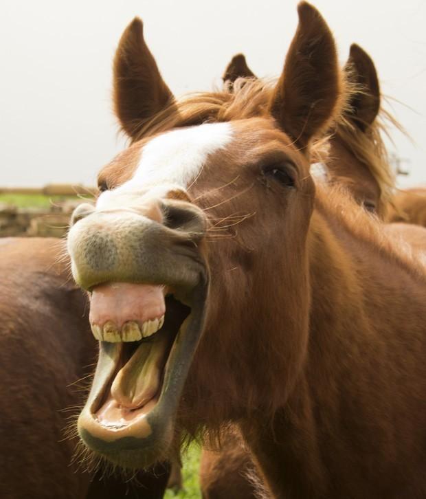 Cavalo 'simpático' dá 'gargalhada' em fronteira da Síria (Foto: Jack Guez/AFP)