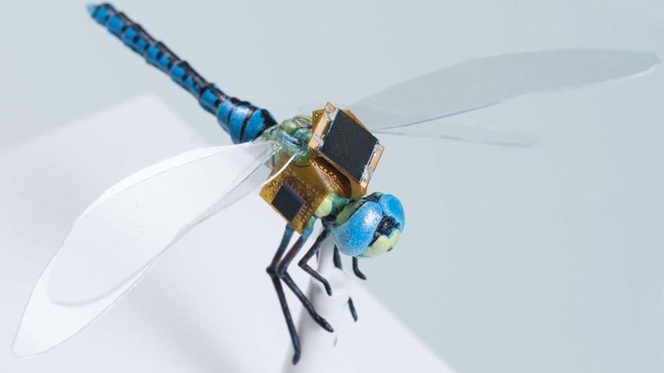 Libélula ganha armadura de alta tecnologia para pesquisa médica (Foto: Divulgação)