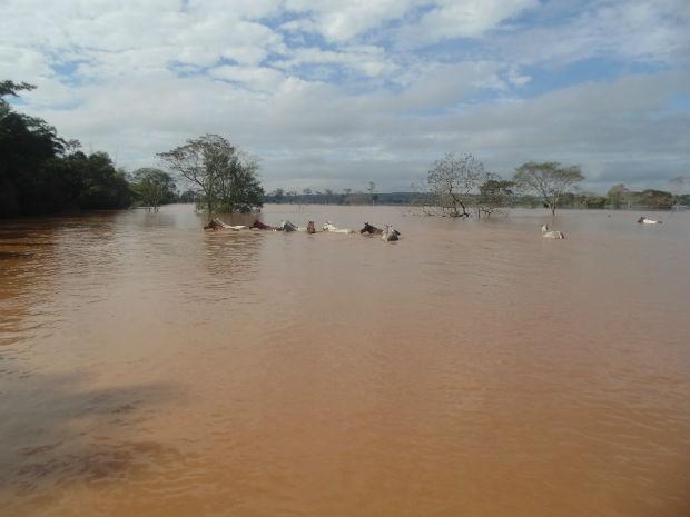 Alguns cavalos não conseguiram fugir a tempo e moradores tentam resgatá-los do meio do rio (Foto: Divulgação/Prefeitura Douradina)