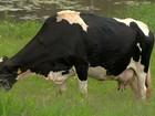 Produtores de leite em Minas Gerais enfrentam dificuldades