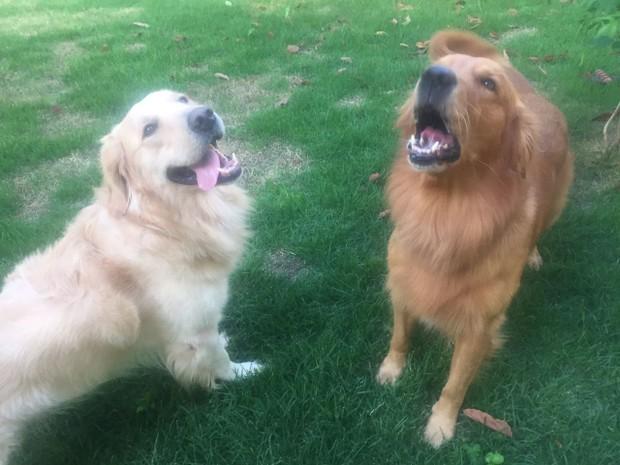 Samantha tem dois cães e toma todos os cuidados na hora de fumar (Foto: Samantha/Arquivo Pessoal)
