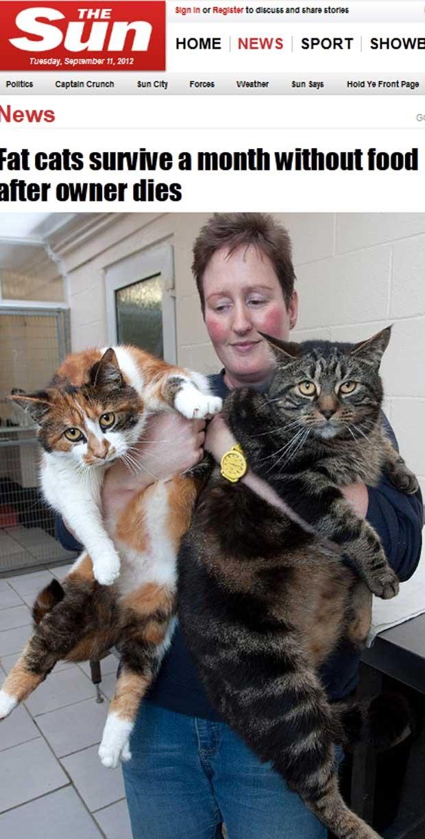Roly Poly e Pudding pesavam 9 quilos quando encontrados (Foto: Reprodução)