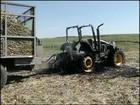 Trabalhador rural morre eletrocutado em fazenda em Ipaussu, SP