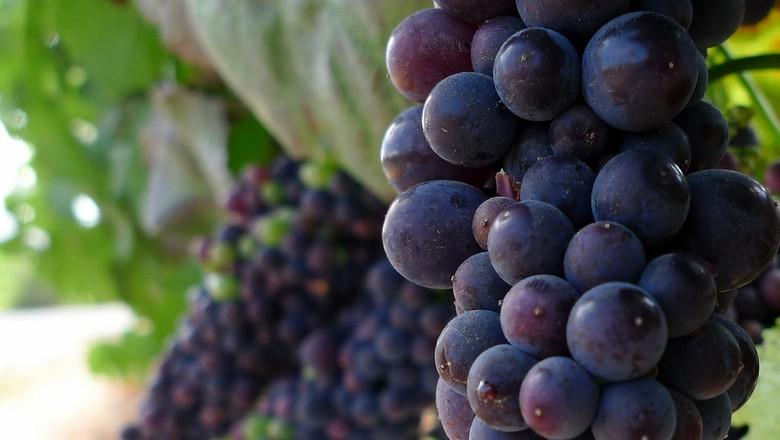 vinho-pinot-noir-vinicola-vinhedo (Foto: bbarrettjr/CCommons)