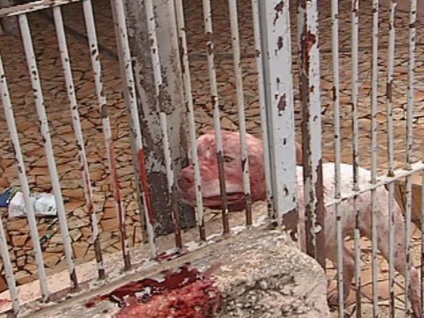 Cachorro ficou sujo de sangue após ataque em Bauru (Foto: Reprodução/TV TEM)