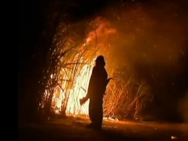 Fogo em canavial ainda é uma prática corriqueira usada na agroindustrial alagoana (Foto: Reprodução/TV Gazeta)