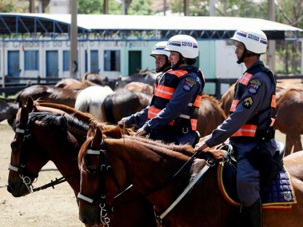 Cavalos foram comprados no Rio Grande do Sul e vão passar por treinamento. (Foto: Assessoria/Sesp-MT)
