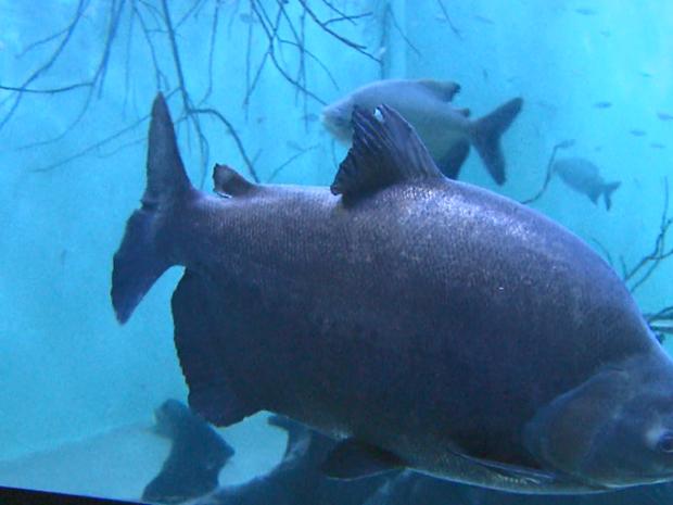 Aquarios servirão também como sala de aula para a população da região aprender a preservar o meio ambiente (Foto: Reprodução/EPTV)