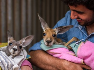 Paulo com cangurus na Austrália (Foto: Christopher Collin/Divulgação)
