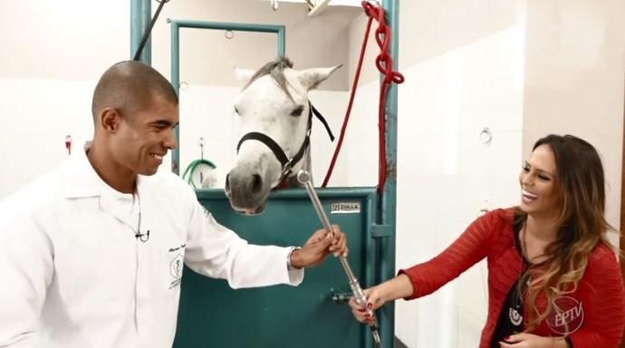 Os instrumentos usados para tratar os dentes dos cavalos são parecidos com os usados em humanos, mas em escala maior (Foto: reprodução EPTV)