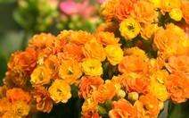 O que você sabe sobre flores?