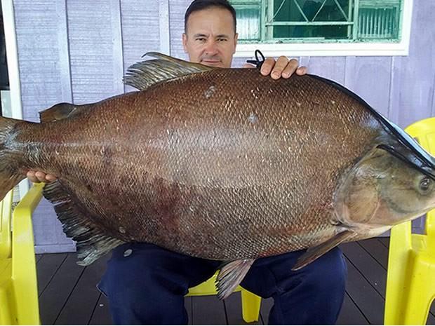 Peixe pega 39,300 kg e será doado para evento em prol de campeonato de taekwondo (Foto: Arquivo pessoal/ James Antônio de Souza)
