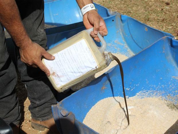 Tratador mistura isotônico à ração dos touros (Foto: Clayton Castelani/ G1)