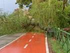 Temporal derrubou mais de 50 árvores em Sorocaba, diz Defesa Civil