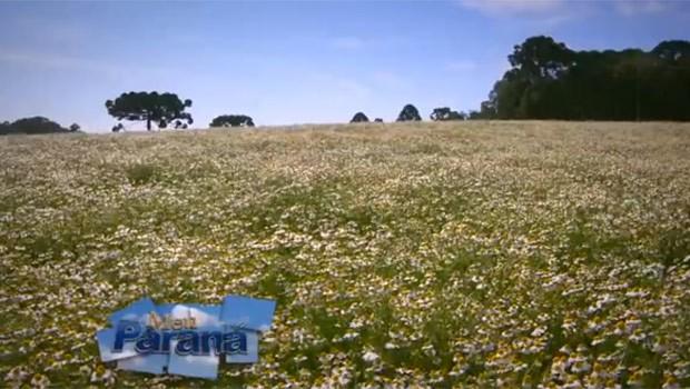 Paraná é responsável por 90% da produção de plantas medicinais do Brasil (Foto: Reprodução)