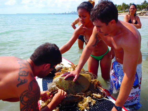 Animais foram resgatado com auxílio de prancha, na praia do Bessa, em João Pessoa  (Foto: Arquivo Pessoal/David Montenegro)