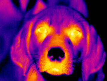 pesquisa_animais_felizes_nestlé (Foto: Divulgação/Nestlé)