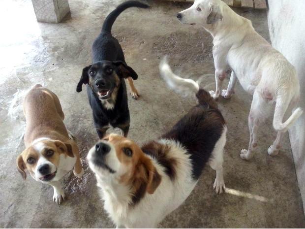 Feira será especial para doação de animais adultos (Foto: Divulgação/APA-BM)