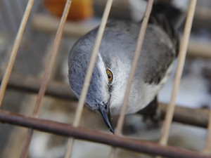 O proprietário não tinha nenhum documento de legalização dos animais (Foto: Vagner Basílio/ Ururau)