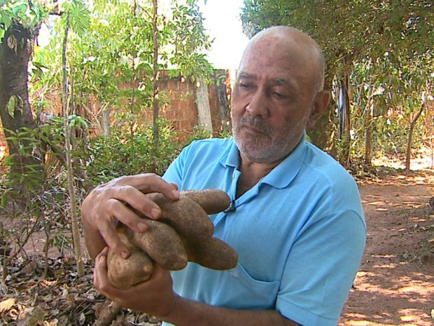 Luiz Gonzaga da Silva colheu um cará gigante em Colina, SP (Foto: Alexandre Sá/EPTV)