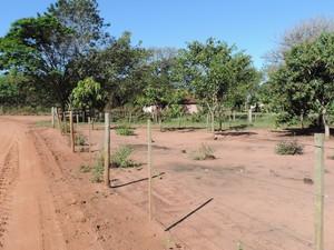 Atualmente, assentados residem na área da antiga Estação Bartira (Foto: Stephanie Fonseca/G1)