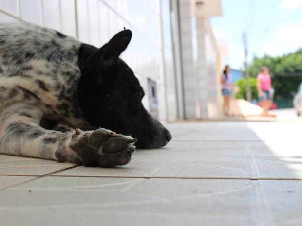 Abandonado, cão aguarda retorno dos donos na porta de casa (Foto: Fernando Brito/G1)
