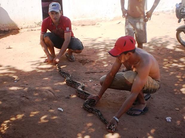Morador captura jiboia com mais de dois metros no Sertão da Paraíba (Foto: Divulgação/Francisco Félix)