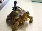 Webcam sem fios transmite vida de tartaruga de 17 anos na internet