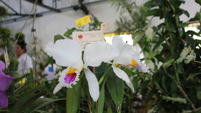 93ª Exposição de Orquídeas em Embu das Artes (Foto: Fernando Bumbeers)