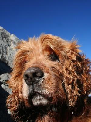 Cachorro não muito contente (Foto: SXC.HU)