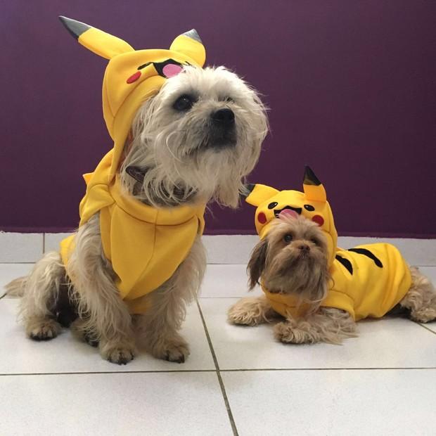 Cães vestidos de Pokémon serão atração de feira de adoção organizada por Luisa Mell (Foto: arquivo pessoal)