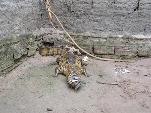 Animal estava amordaçado e criado como um cachorro em João Pessoa  (Foto: Walter Paparazzo/G1)