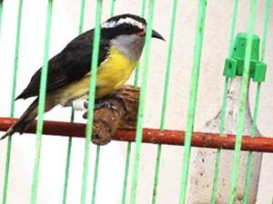 PM Ambiental resgata cerca de 30 aves na Grande João Pessoa, Paraíba (Foto: Walter Paparazzo/G1 )