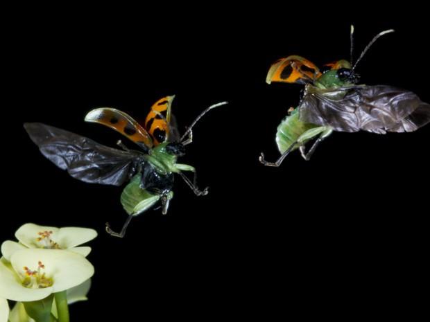 Fotógrafo se apaixonou por imagens da natureza em 1996 (Foto: Hudson Garcia)