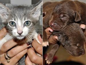 Centro de Zoonoses realiza campanha de adoção de animais na Paraíba (Foto: Luiz Vaz/Divulgação)